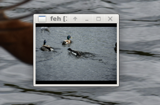 Screenshots of package feh